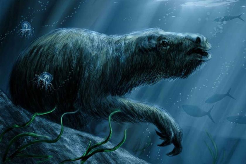 Víz alá merülő őslajhárok is voltak.