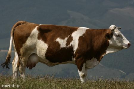 Ez a kedves állat csak illusztráció. Kattintson a lázadókért!