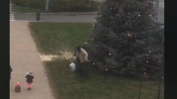 Szatyorba szedegetve lopták Tata karácsonyfájának díszeit