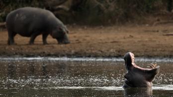 28 viziló pusztult el lépfene miatt egy malawi nemzeti parkban