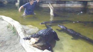 Elszakadt a kötél mutatvány közben, beesett az aligátorok közé