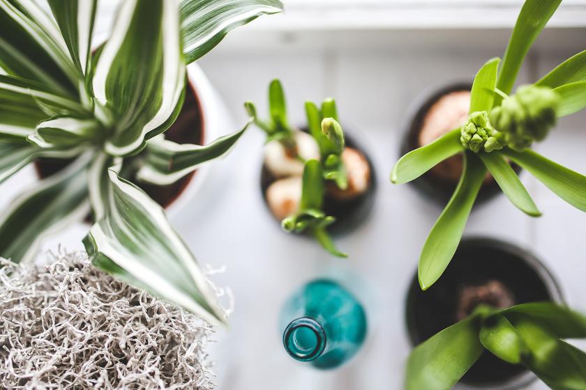 Ezek a kártevők télen sem pihennek: a szobanövényekről így irthatod ki őket