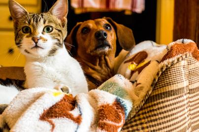 kutya macska baratsag 1