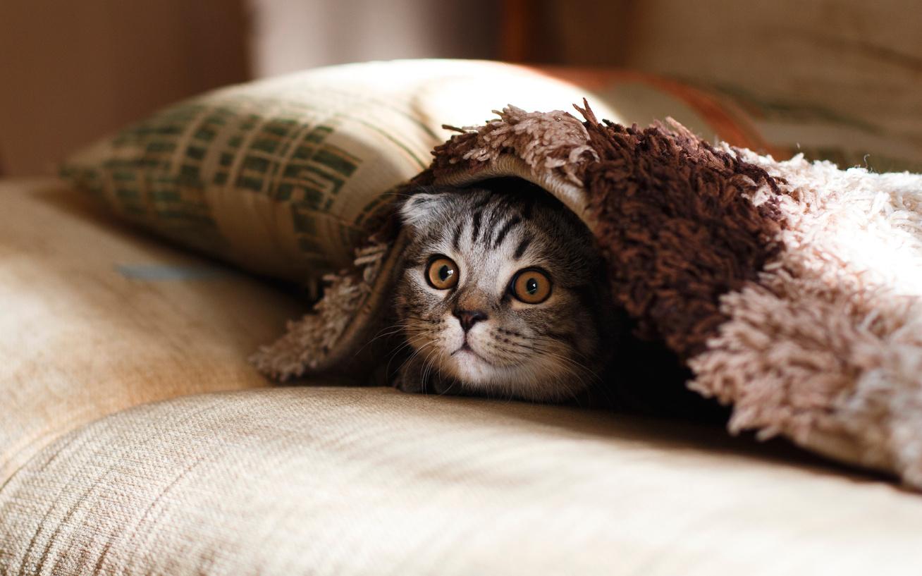 macska cica otthon háziállat (2)