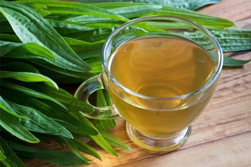 Lándzsás útifű - teaként is antibakteriális és gyulladáscsökkentő, enyhíti a torokviszketést, emellett segít megszabadulni a huruttól.