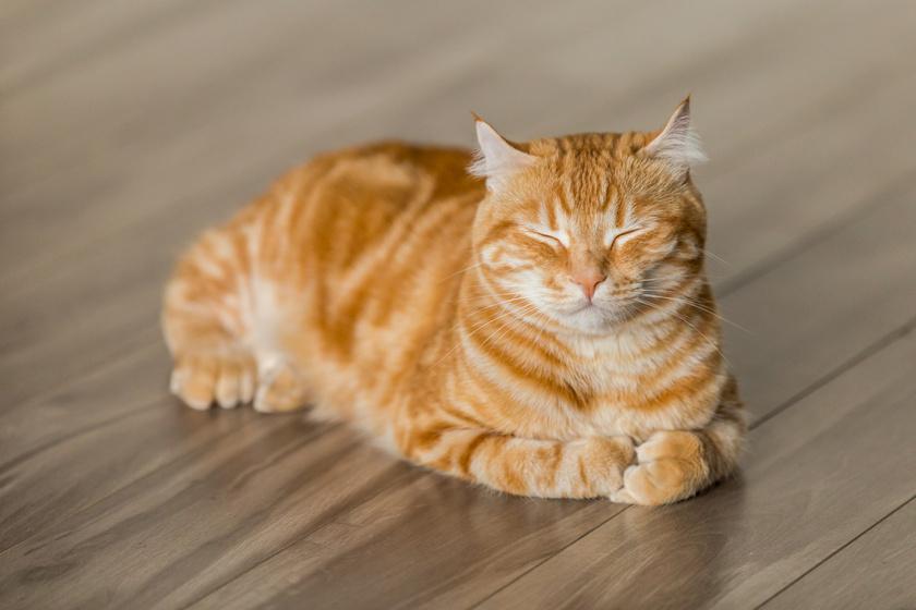 Mutatjuk az év legviccesebb macskás GIF-jeit!