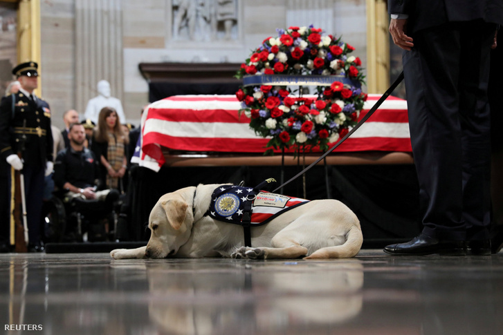 Sully, George H.W. Bush kutyája fekszik Bush koporsója mellett 2018. december 4-én Capitol Hillben, Washingtonban