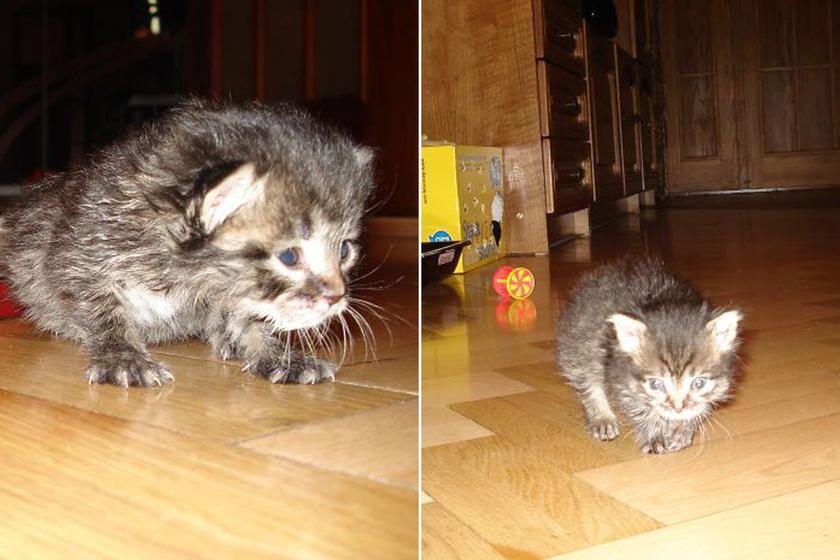 Beköltözése napján a kiscica még nem tudott önállóan enni, sőt, a szemeit sem nyitotta ki, ezért a lány és szülei felváltva etették két-három óránként.