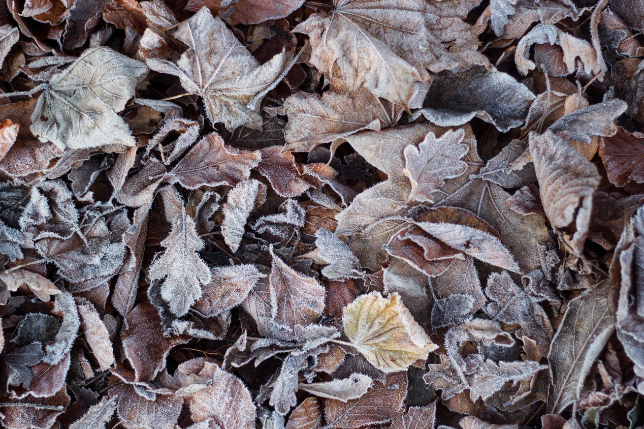 fagyott-levelek