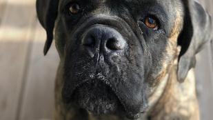 40-50 önkéntes keresi Tóth Vera kutyáját