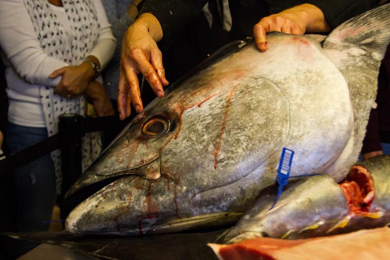 Rendelés beérkezése esetén a kiválasztott halat a fej egy bizonyos pontját eltalálva szigonyozzák le speciálisan képzett búvárok