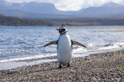 pingvin cuki part