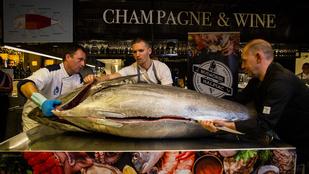 Így bontanak fel egy közel kétmázsás tonhalat - galéria!