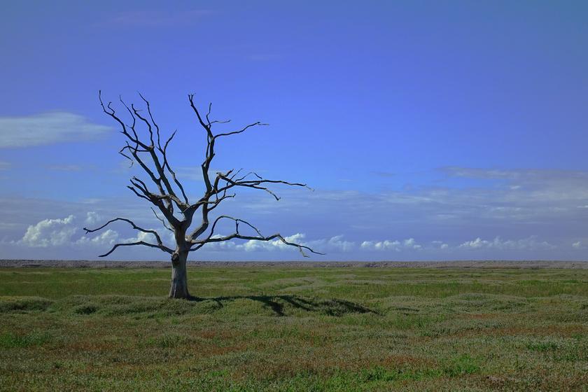 2030-ra óriási fordulatot vehet a földi klíma: számos faj eltűnhet