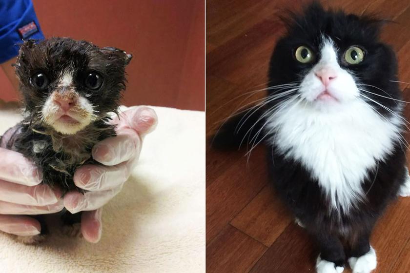 Így változnak meg a cicák örökbefogadás előtt és után – Megható képeken az átalakulásuk