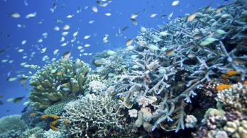 Jó hírek a Nagy-korallzátonyról