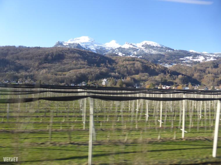 Itt szőlőt termesztenek!