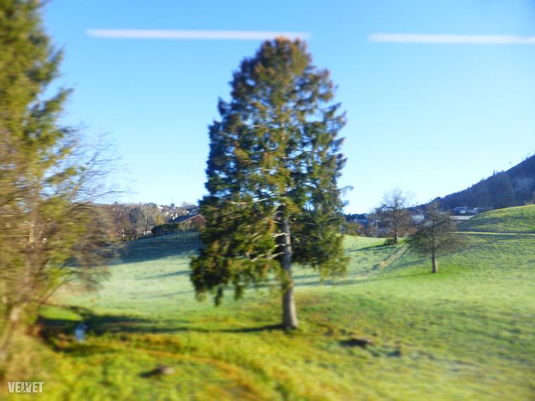 Itt még nagyon zöld minden, de nem lesz ez így sokáig, mert lassan elindulunk felfelé a hegyekbe.