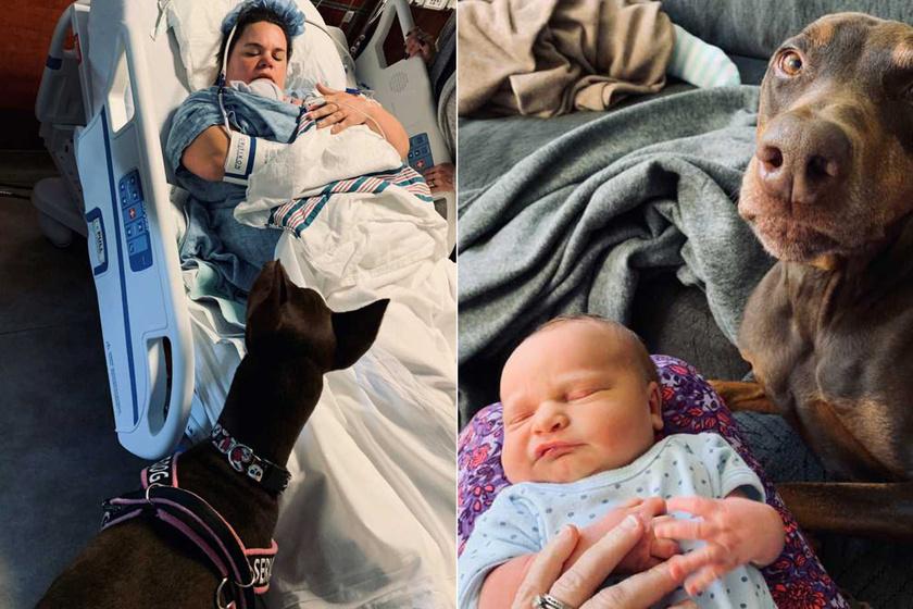 A szülés előtt végig gazdijával volt a segítő kutya – Amit a babával művel, azon az egész net olvadozik
