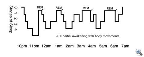 A bal oldali oszlop az alvás mélységét jelzi (0-éber, 4-mély álom), míg a vízszintes diagram a 22.00-07.00 közötti időben mutatja az egyes fázisok mélységét. A pozícióváltások, mozgások kis pálcikával jelöltek. Sajnos a helyzet nem ennyire egyértelmű mindenkinél.