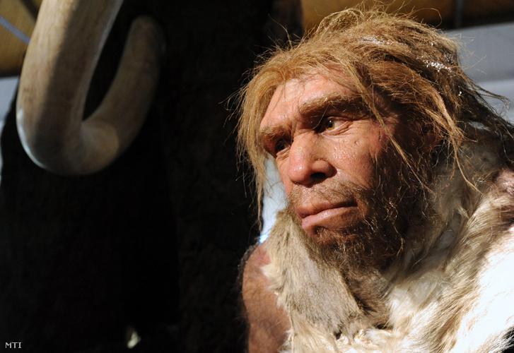 Neandervölgyi ember (Homo neanderthalensis) élethű modellje a Magyar Természettudományi Múzeumban