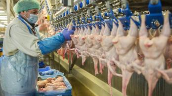 Csirkecsont és műanyag: ez marad az emberiségből, amikor már rég kihaltunk