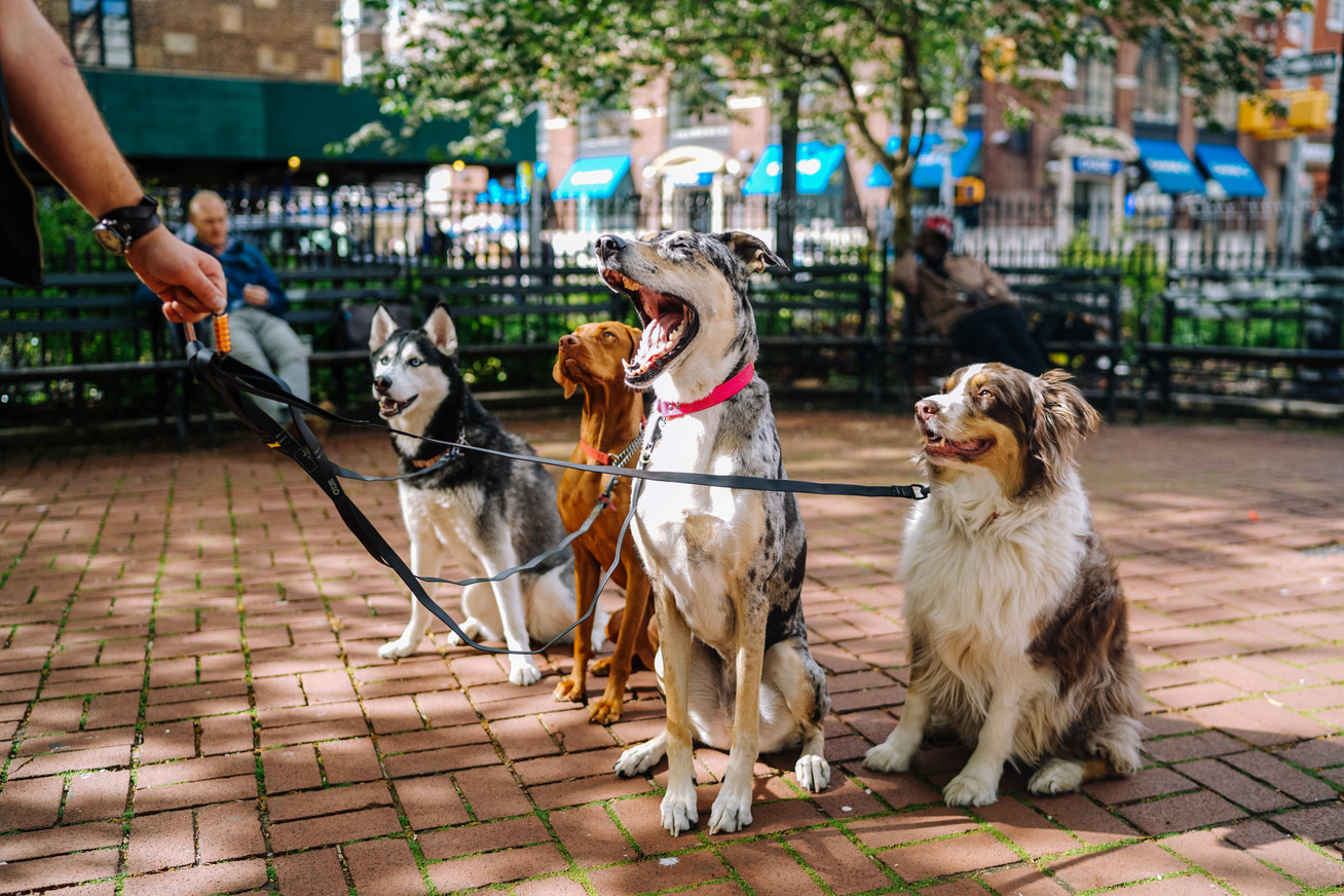 kutyák séta fajták