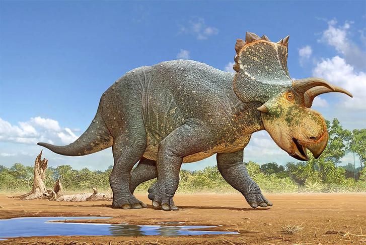 Crittendenceratops krzyzanowskii-novataxa 2018-Dalman Hodnett Li