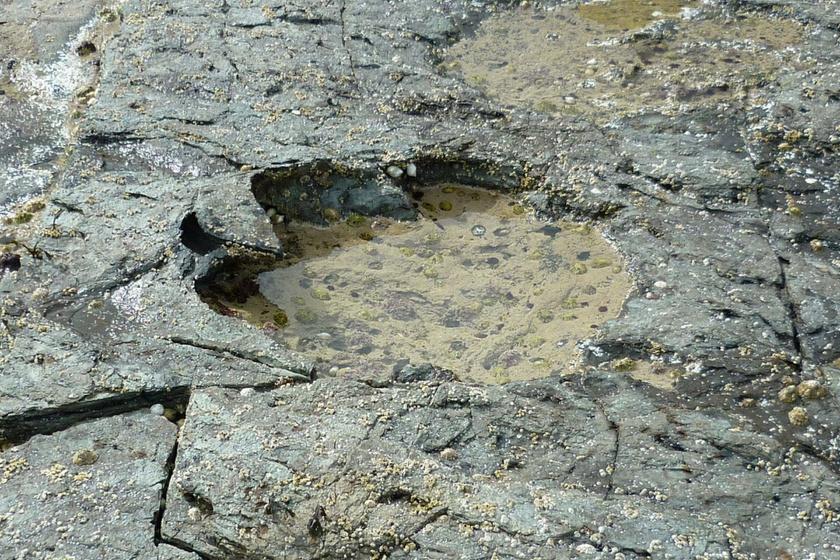 100 millió éves dinoszaurusz-lábnyomokra bukkantak - Szenzációs felfedezés