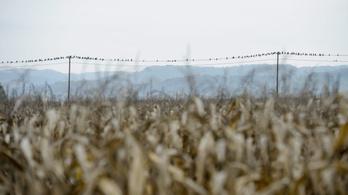 Alkotmánybíróság elé küldené a gazdálkodók szakmai szervezete az új földtörvényt