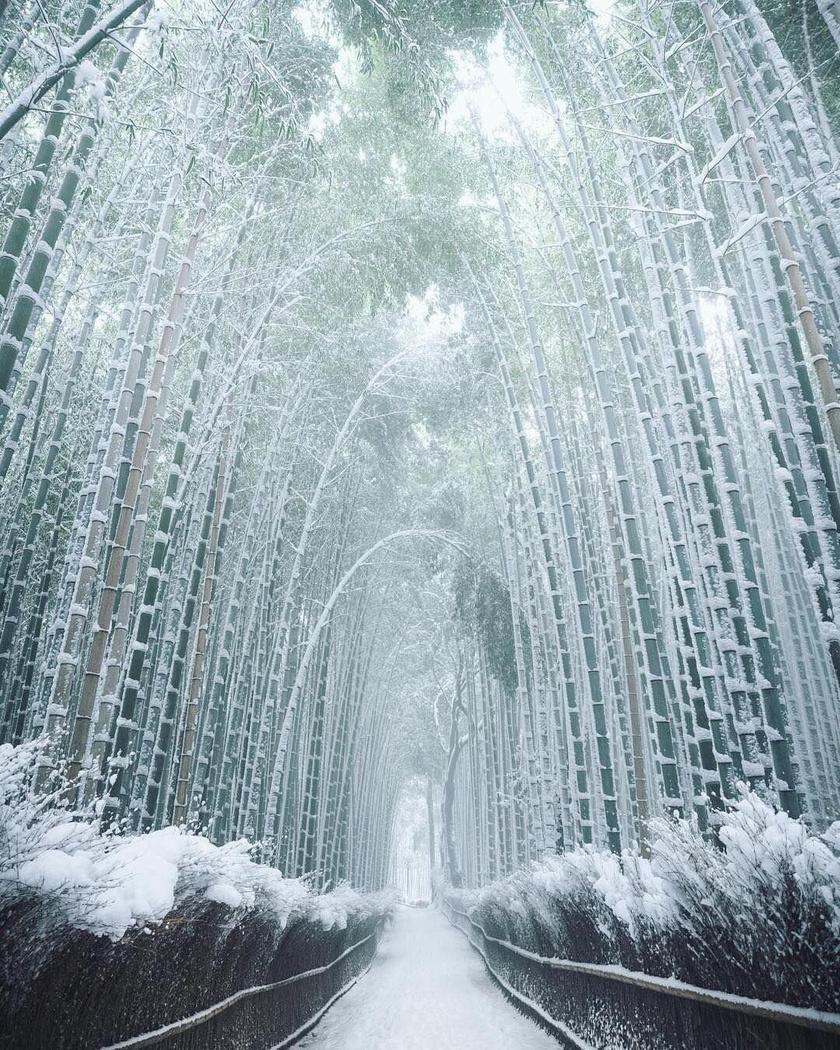 A japán Arashiyama mesebeli bambuszligete, a Sagano bambuszerdő zöldellő pompában ismert igazán. Pedig télen is meseszerű.