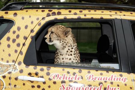 tk3s bm cheetah efg2910 07