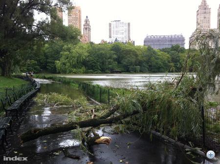 A hurrikán elvonulása után a Central Parkban