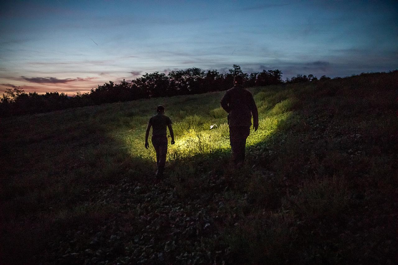 A bikák a hajnali és esti órákban igazán aktívak. Minél rövidebb a nappali órák száma, a bikáknál annál inkább beindul a tesztoszteron termelés. Ez neurohormonális szabályozás útján történik, amit a fény és sötétség arányának éves (ún. cirkannuális) változása idéz elő.