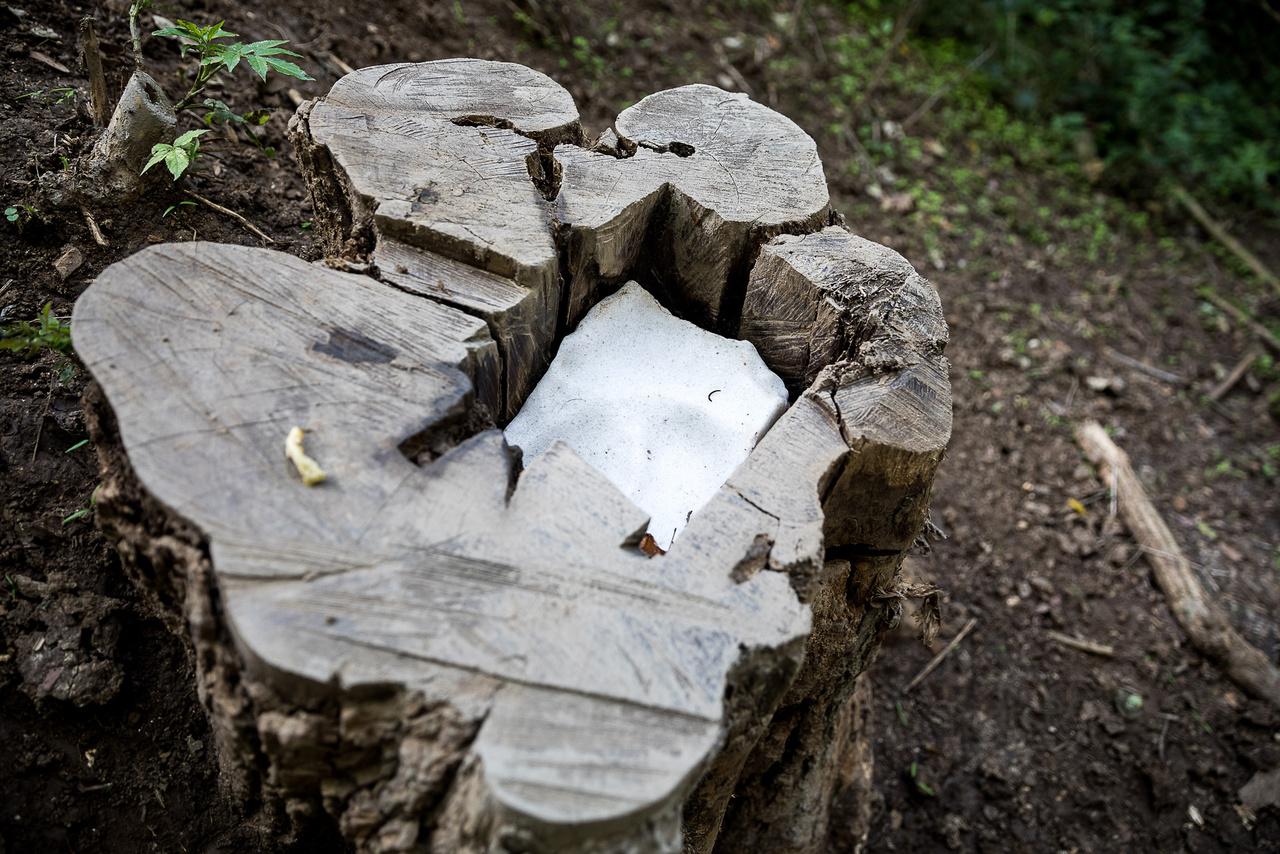 """Gyakran helyeznek ki nyalósót a """"csülkösvadnak"""", szarvasoknak és az őzeknek az ásványianyag-pótlás miatt - ahogy a gazdák szarvasmarhának vagy kecskének is egyébként -, mert a kérődzőknek szükségük van rá, akár vad, akár háziállat."""