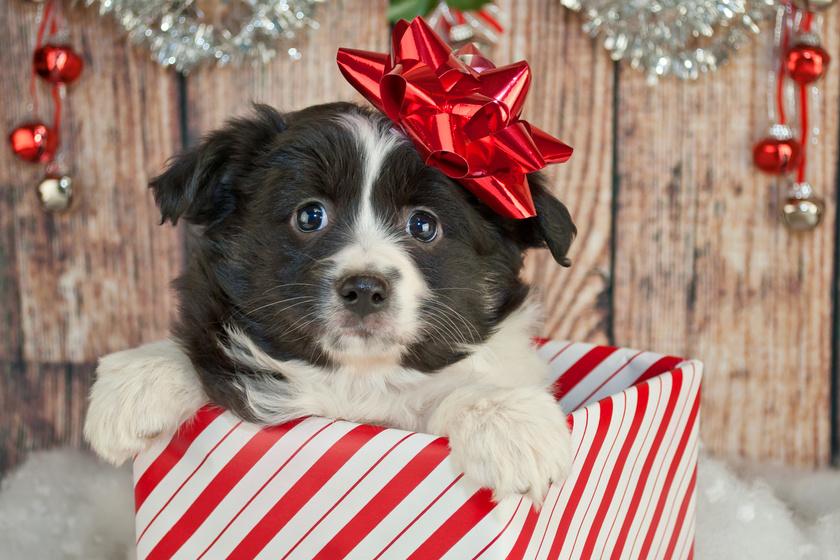 Hiába akar jót, rosszat tesz vele, aki ilyesmit ajándékoz karácsonyra