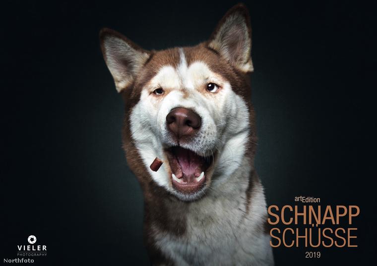 """A német fotós, Christian Vieler, 2013 óta tökéletesíti a """"kutyák jutalom falatot kapnak"""" témájú képeit"""