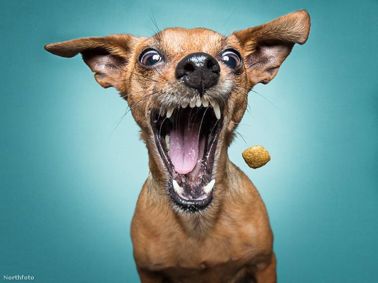 Ugye, hogy mindegyik itt látott kutya ábrázta ismerős?