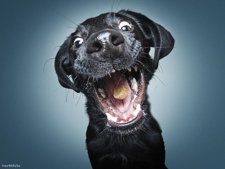 Öt évvel ezelőtt ugyanis a vakuját tesztelgette a saját kutyáján és így lőtte az első itt láthatókhoz hasonló fotókat.