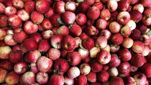 Mennyire egészséges valójában az alma?