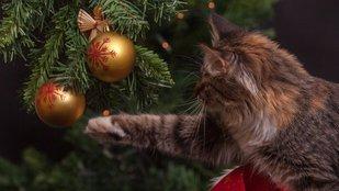 Macska vs. karácsonyfa - melyik éli túl?
