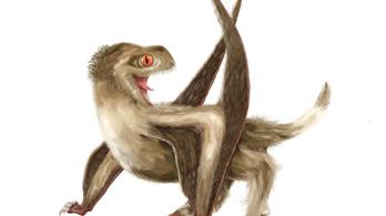 Sokkal régebbi lehet a madártollak eredete, mint azt eddig gondoltuk