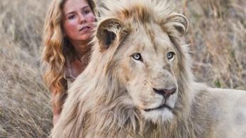 Az oroszlánbébik márpedig felnőnek