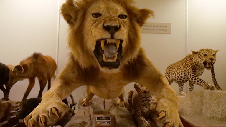 Komoly károkat okozhat a Természettudományi Múzeum Debrecenbe költöztetése