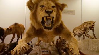 Egy múzeum nem légvédelmi üteg, hogy titkolni kelljen a költöztetését
