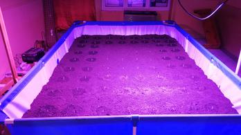 Fémvázas medencében termesztették a kendert Hódmezővásárhelyen