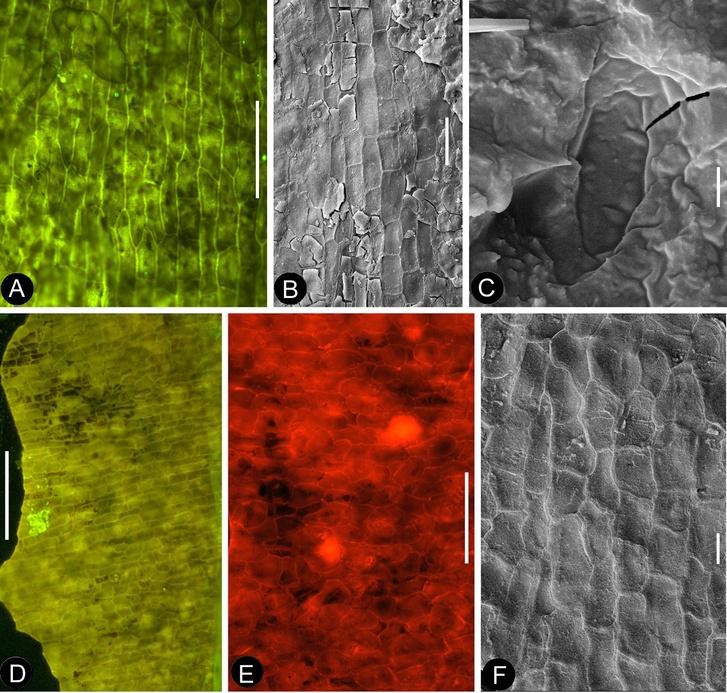 Mikroszkópos vizsgálatokkal elemezték az ősvirág fosszíliáit