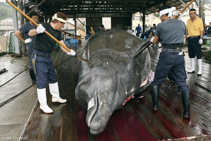 Japán bálnavadászok 2006-ban