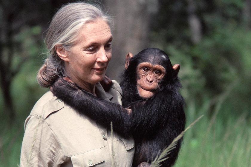 Feladta az életét az állatokért, és még most is a világot akarja megmenteni: Jane Goodall példaértékű története