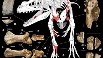 Hatalmas ragadozó dinoszauruszt találtak az olasz Alpokban